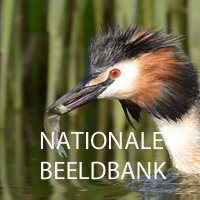 Nationale Beeldbank