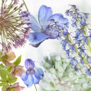 Allium samenstel cj 02_bewerkt-4
