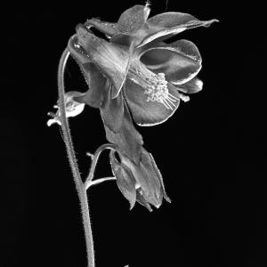 planten_001