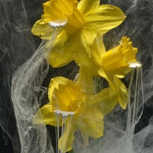 Narcis ck 74