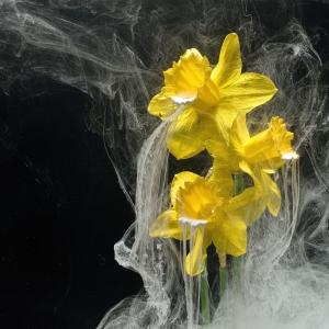 Narcis ck 72