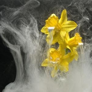 Narcis ck 78