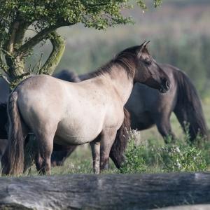 Paard 2016 01