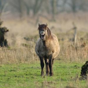 paard cg 32