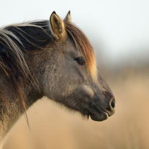 paard cg 44