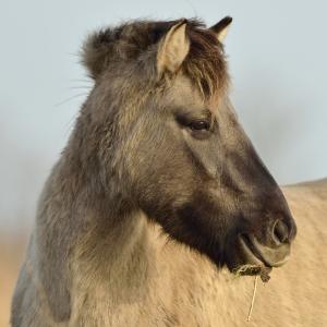 paard cg 49