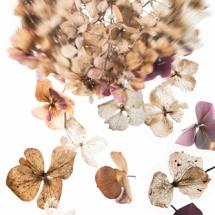 presentatie6Bloemen6Samenstel hortensia 3 kl